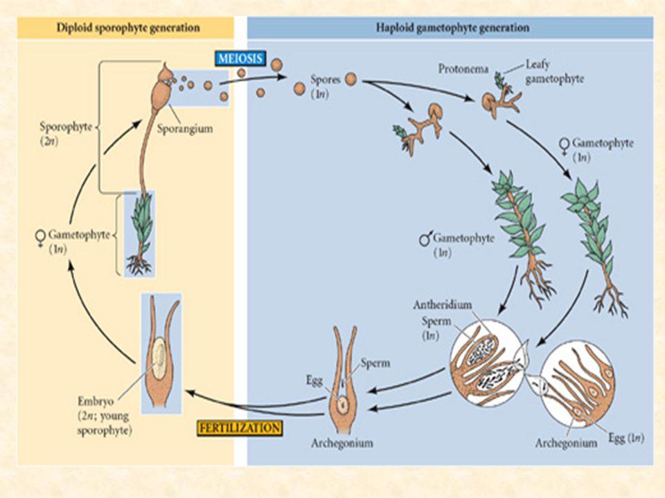 Allergenic Pollen (SEM x1,000).