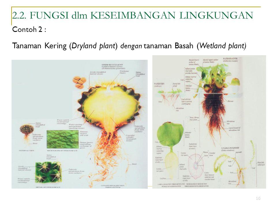 10 2.2. FUNGSI dlm KESEIMBANGAN LINGKUNGAN Contoh 2 : Tanaman Kering (Dryland plant) dengan tanaman Basah (Wetland plant)