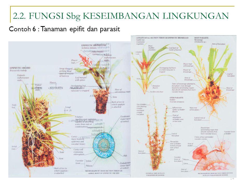 14 2.2. FUNGSI Sbg KESEIMBANGAN LINGKUNGAN Contoh 6 : Tanaman epifit dan parasit