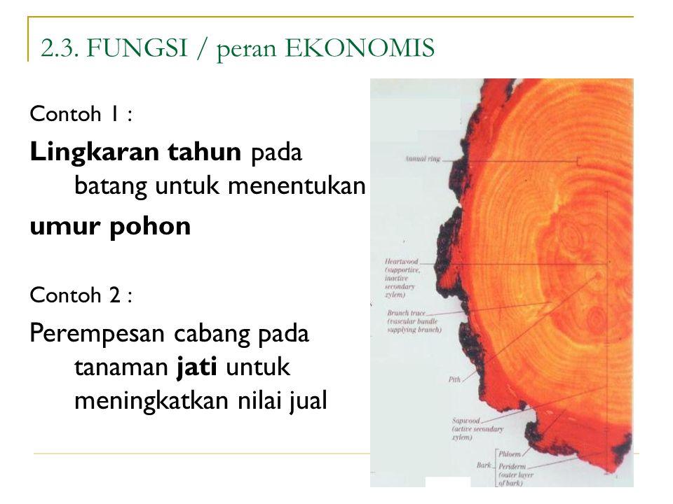 19 2.3. FUNGSI / peran EKONOMIS Contoh 1 : Lingkaran tahun pada batang untuk menentukan umur pohon Contoh 2 : Perempesan cabang pada tanaman jati untu