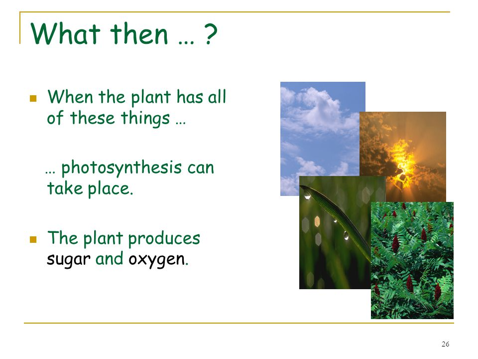 27 A closer look at photosynthesis 2.Light in Oxygen out 1.