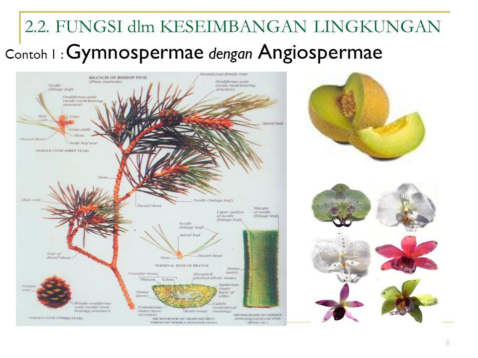 9 2.2. FUNGSI dlm KESEIMBANGAN LINGKUNGAN Contoh 1 : Gymnospermae dengan Angiospermae
