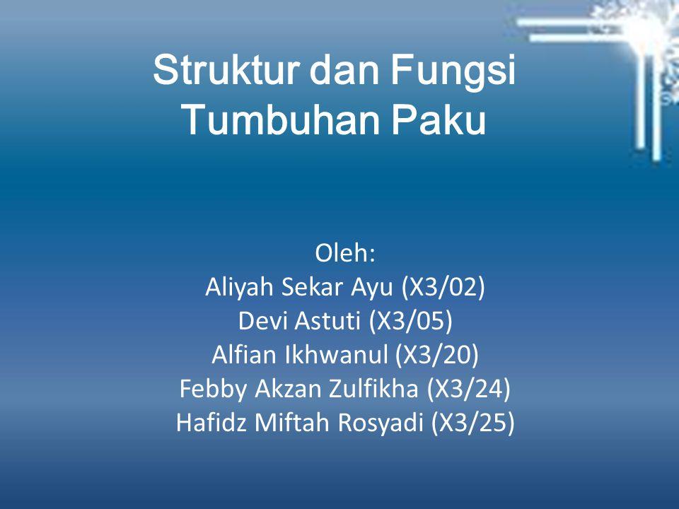 Struktur dan Fungsi Tumbuhan Paku Oleh: Aliyah Sekar Ayu (X3/02) Devi Astuti (X3/05) Alfian Ikhwanul (X3/20) Febby Akzan Zulfikha (X3/24) Hafidz Miftah Rosyadi (X3/25)