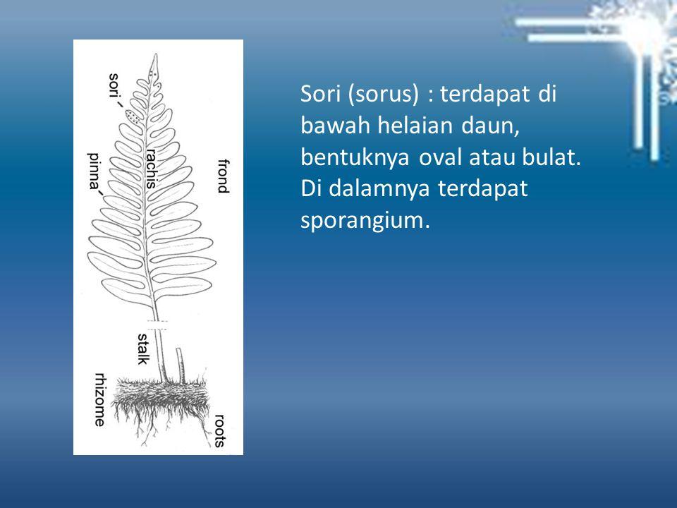 Sori (sorus) : terdapat di bawah helaian daun, bentuknya oval atau bulat.