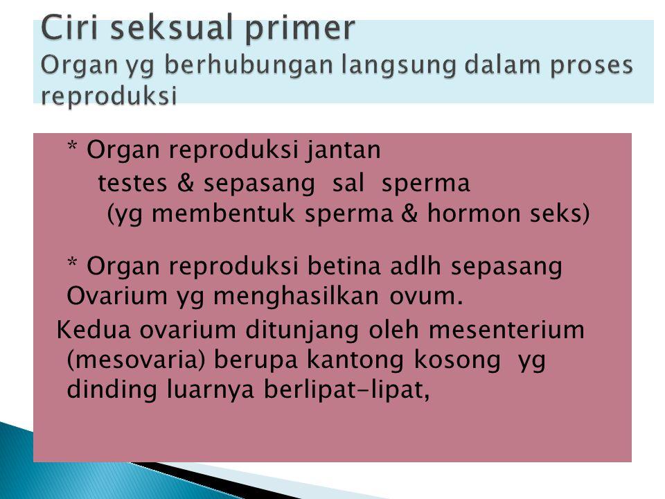 * Organ reproduksi jantan testes & sepasang sal sperma (yg membentuk sperma & hormon seks) * Organ reproduksi betina adlh sepasang Ovarium yg menghasi