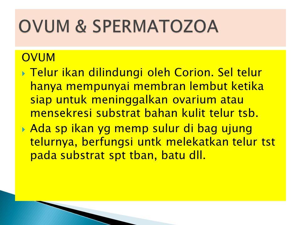 OVUM  Telur ikan dilindungi oleh Corion. Sel telur hanya mempunyai membran lembut ketika siap untuk meninggalkan ovarium atau mensekresi substrat bah