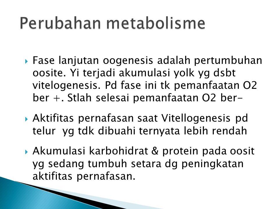  Fase lanjutan oogenesis adalah pertumbuhan oosite. Yi terjadi akumulasi yolk yg dsbt vitelogenesis. Pd fase ini tk pemanfaatan O2 ber +. Stlah seles