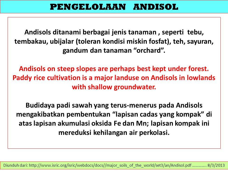 PENGELOLAAN ANDISOL Andisols ditanami berbagai jenis tanaman, seperti tebu, tembakau, ubijalar (toleran kondisi miskin fosfat), teh, sayuran, gandum d