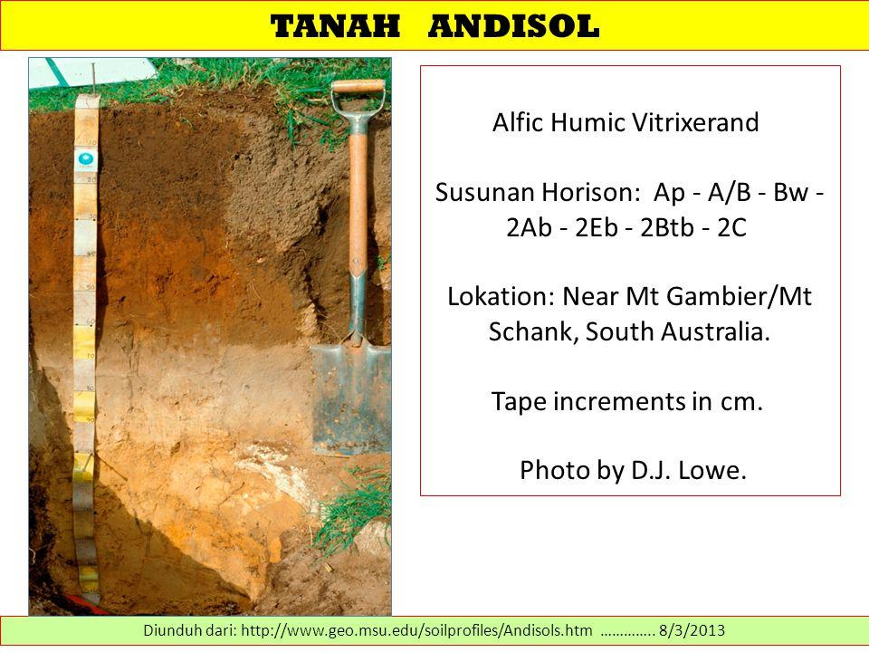 TANAH ANDISOL Alfic Humic Vitrixerand Susunan Horison: Ap - A/B - Bw - 2Ab - 2Eb - 2Btb - 2C Lokation: Near Mt Gambier/Mt Schank, South Australia. Tap