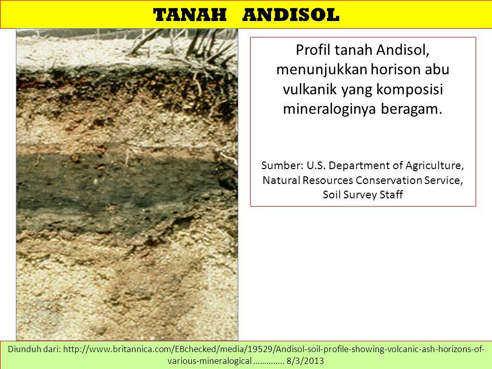TANAH ANDISOL Profil tanah Andisol, menunjukkan horison abu vulkanik yang komposisi mineraloginya beragam. Sumber: U.S. Department of Agriculture, Nat