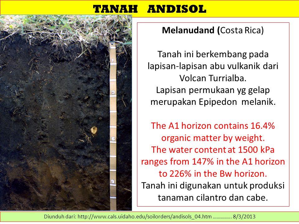 TANAH ANDISOL Melanudand (Costa Rica) Tanah ini berkembang pada lapisan-lapisan abu vulkanik dari Volcan Turrialba. Lapisan permukaan yg gelap merupak