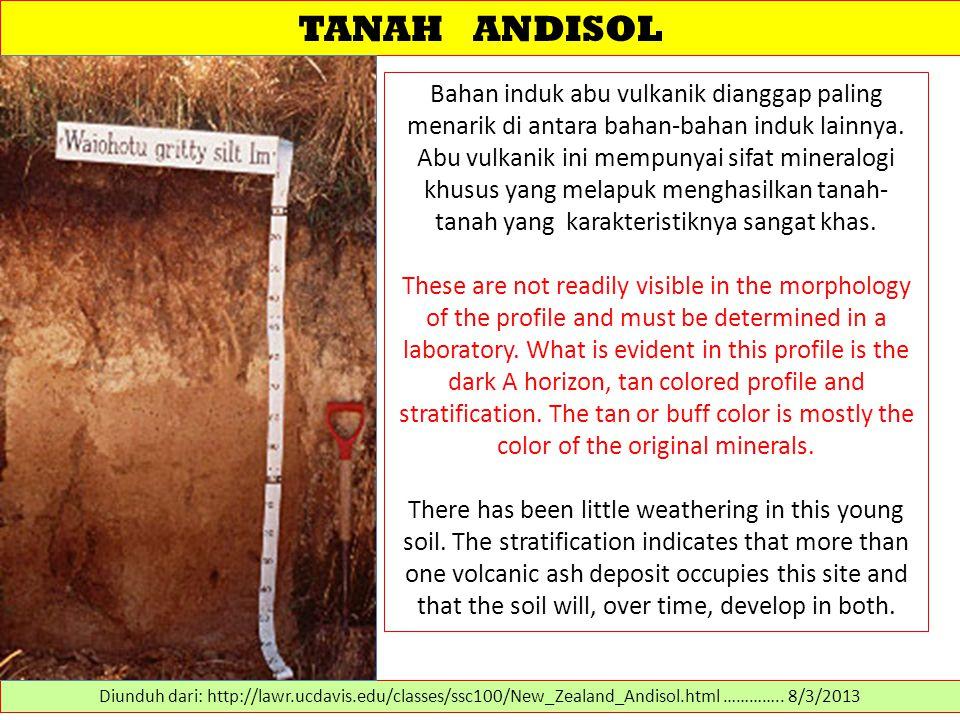 TANAH ANDISOL Bahan induk abu vulkanik dianggap paling menarik di antara bahan-bahan induk lainnya. Abu vulkanik ini mempunyai sifat mineralogi khusus