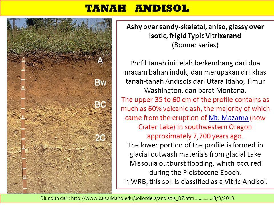 TANAH ANDISOL Ashy over sandy-skeletal, aniso, glassy over isotic, frigid Typic Vitrixerand (Bonner series) Profil tanah ini telah berkembang dari dua