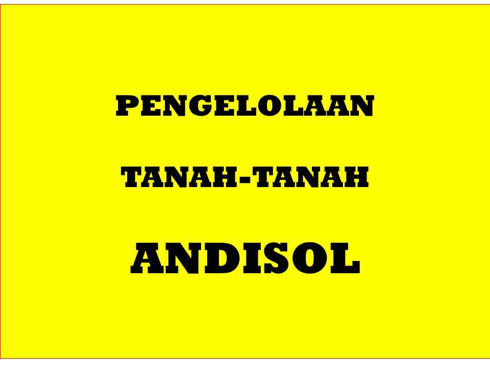 PENGELOLAAN TANAH-TANAH ANDISOL