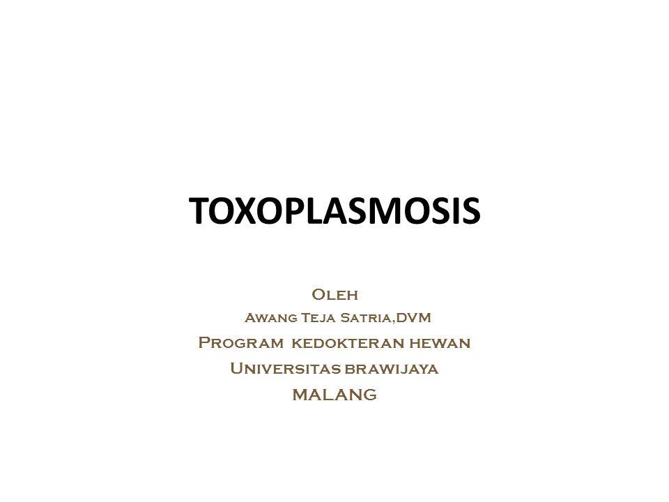 TOXOPLASMOSIS Oleh Awang Teja Satria,DVM Program kedokteran hewan Universitas brawijaya MALANG