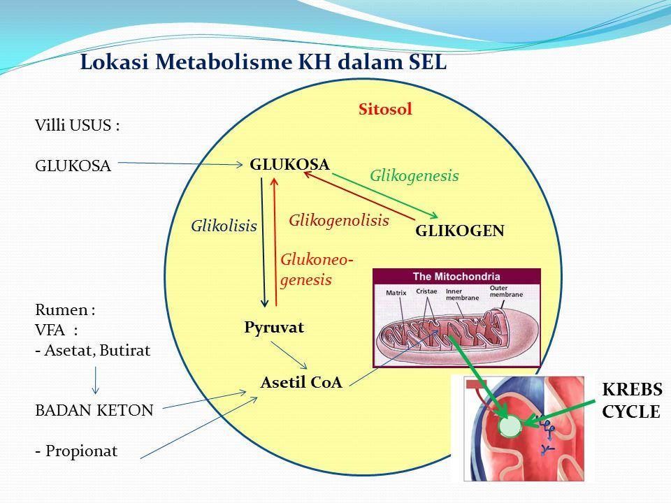 Lokasi Metabolisme KH dalam SEL Sitosol GLUKOSA GLIKOGEN Glikogenesis Glikogenolisis Pyruvat Asetil CoA KREBS CYCLE Glikolisis Glukoneo- genesis Villi
