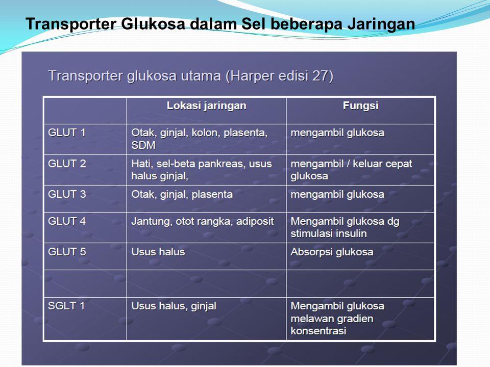 Transporter Glukosa dalam Sel beberapa Jaringan
