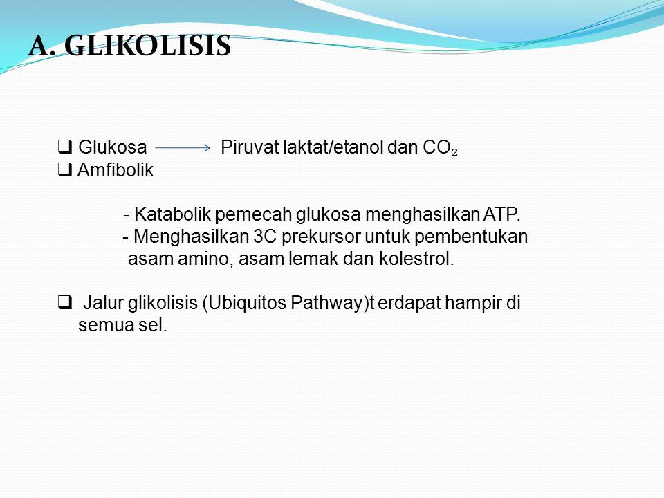 A. GLIKOLISIS  Glukosa Piruvat laktat/etanol dan CO ₂  Amfibolik - Katabolik pemecah glukosa menghasilkan ATP. - Menghasilkan 3C prekursor untuk pem