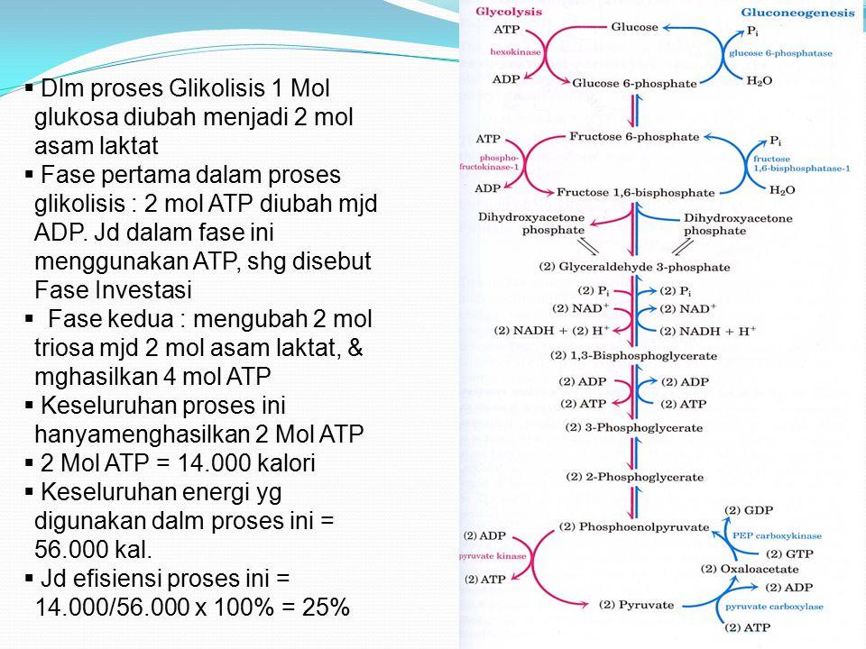  Dlm proses Glikolisis 1 Mol glukosa diubah menjadi 2 mol asam laktat  Fase pertama dalam proses glikolisis : 2 mol ATP diubah mjd ADP. Jd dalam fas