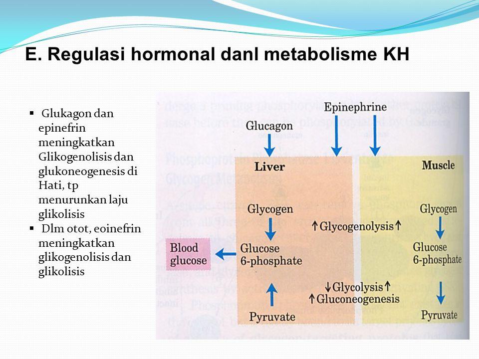 E. Regulasi hormonal danl metabolisme KH  Glukagon dan epinefrin meningkatkan Glikogenolisis dan glukoneogenesis di Hati, tp menurunkan laju glikolis