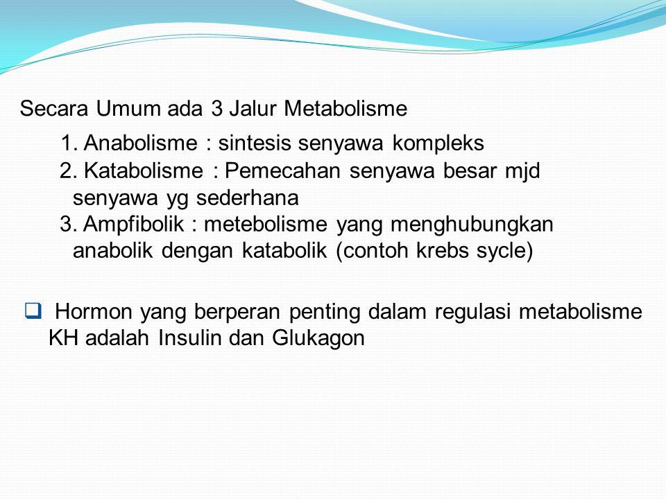  Hormon yang berperan penting dalam regulasi metabolisme KH adalah Insulin dan Glukagon Secara Umum ada 3 Jalur Metabolisme 1. Anabolisme : sintesis