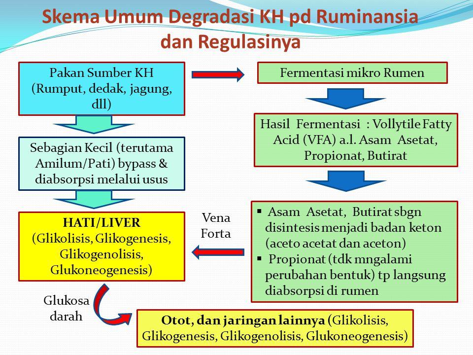 Skema Umum Degradasi KH pd Ruminansia dan Regulasinya Pakan Sumber KH (Rumput, dedak, jagung, dll) Fermentasi mikro Rumen Hasil Fermentasi : Vollytile