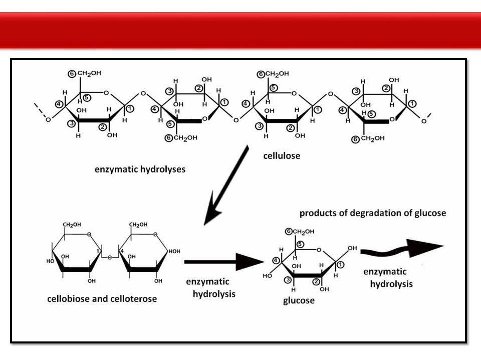 SAKARIFIKASI ENZIMATIS -Enzim endoglukonase -Memecah secara acak ujung rantai selulosa membentuk ujung rantai bebas -Enzim eksoglukanase -Pendegradasi