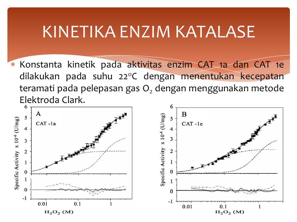  Konstanta kinetik pada aktivitas enzim CAT 1a dan CAT 1e dilakukan pada suhu 22 o C dengan menentukan kecepatan teramati pada pelepasan gas O 2 dengan menggunakan metode Elektroda Clark.