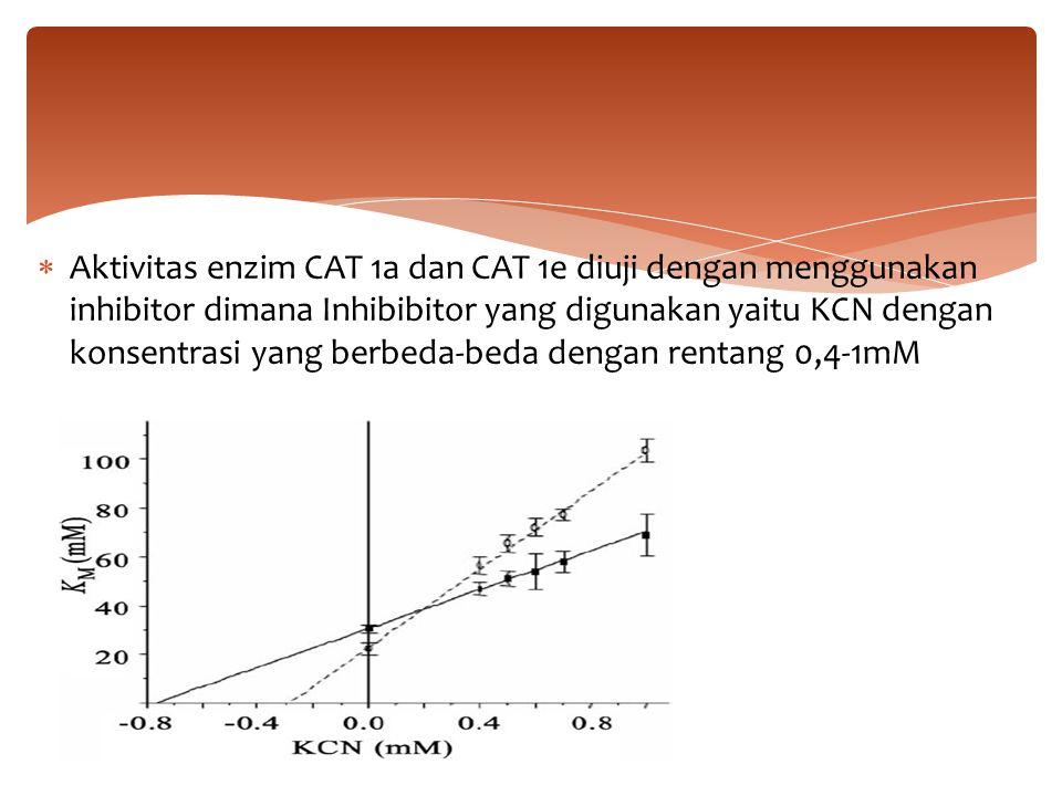 Aktivitas enzim CAT 1a dan CAT 1e diuji dengan menggunakan inhibitor dimana Inhibibitor yang digunakan yaitu KCN dengan konsentrasi yang berbeda-bed