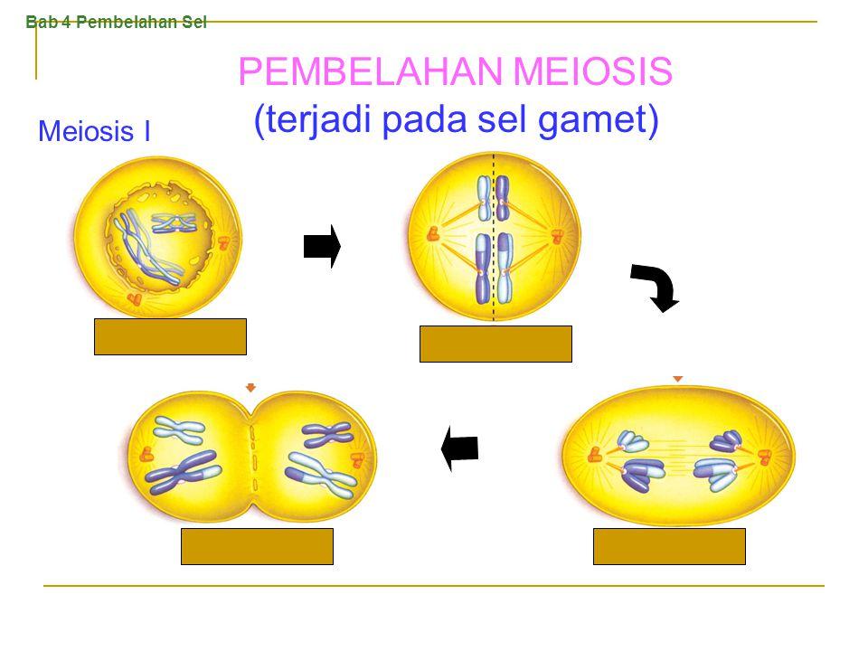 Sitokinesis pada sel tumbuhan. Sitokinesis pada sel hewan. Bab 4 Pembelahan Sel PEMBELAHAN MITOSIS (2)