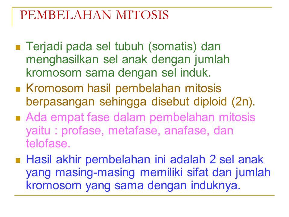 SIKLUS SEL Fase pembelahan sel (mitotik / M). Fase pertumbuhan (interfase), terdiri dari : a. G1.(fase gap 1) b. S. (fase sintesis) c. G2.(fase gap 2)