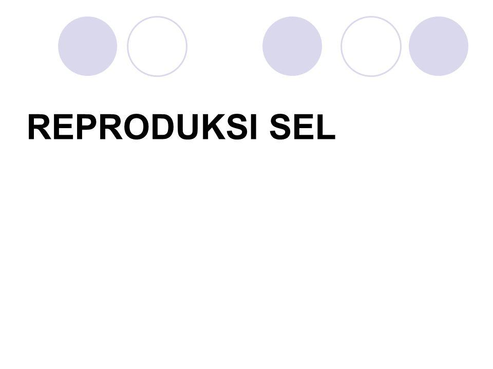 Reproduksi protista berbeda dengan sel hewan lainnya Jamur → spora Tanaman → biji Hewan → telur Protista → sel tunggal Sel anak → mempunyai membran, sitoplasma dan inti Inti mengandung DNA yang identik