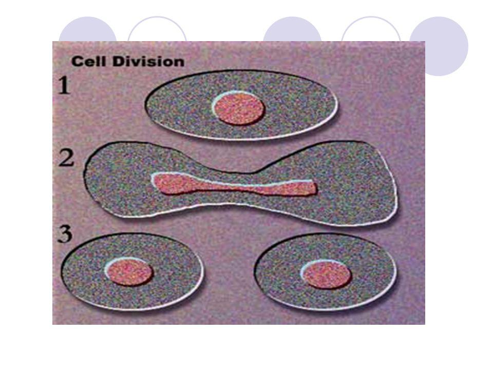 REPRODUKSI SEL MITOSIS → sel somatik MEIOSIS → sel seks atau gamet (spermatozoa dan ovum)