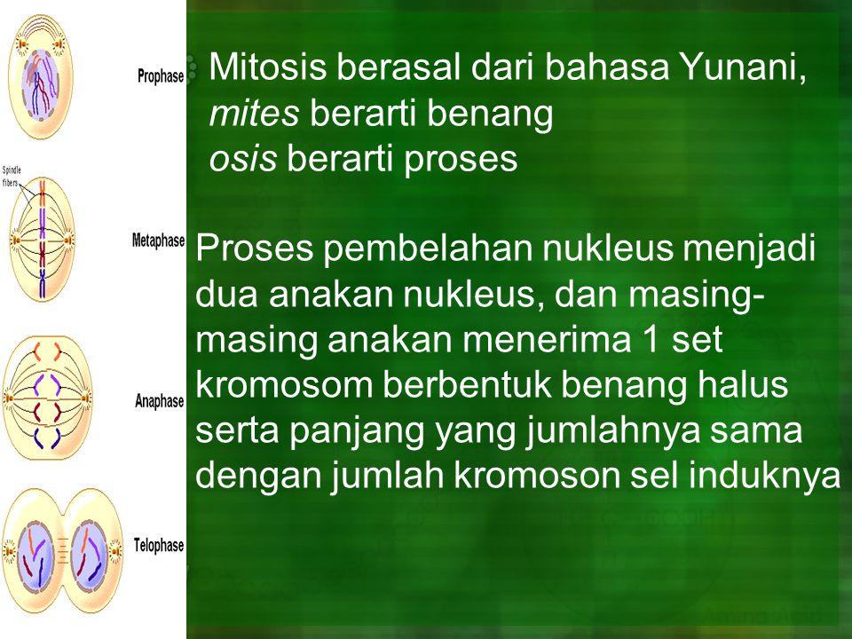 Mitosis berasal dari bahasa Yunani, mites berarti benang osis berarti proses Proses pembelahan nukleus menjadi dua anakan nukleus, dan masing- masing anakan menerima 1 set kromosom berbentuk benang halus serta panjang yang jumlahnya sama dengan jumlah kromoson sel induknya