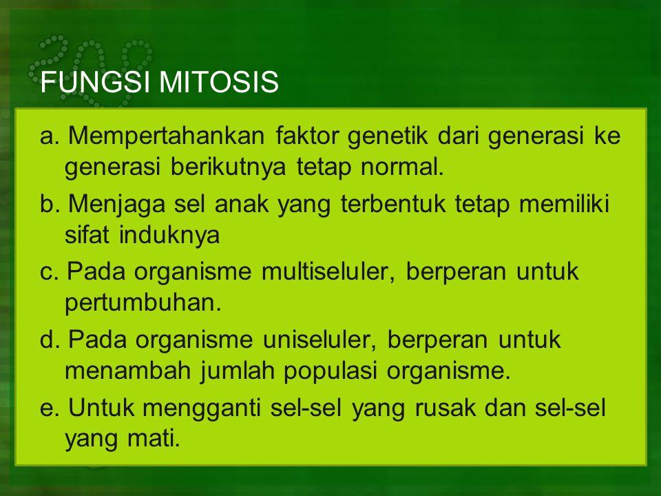 FUNGSI MITOSIS a.Mempertahankan faktor genetik dari generasi ke generasi berikutnya tetap normal.
