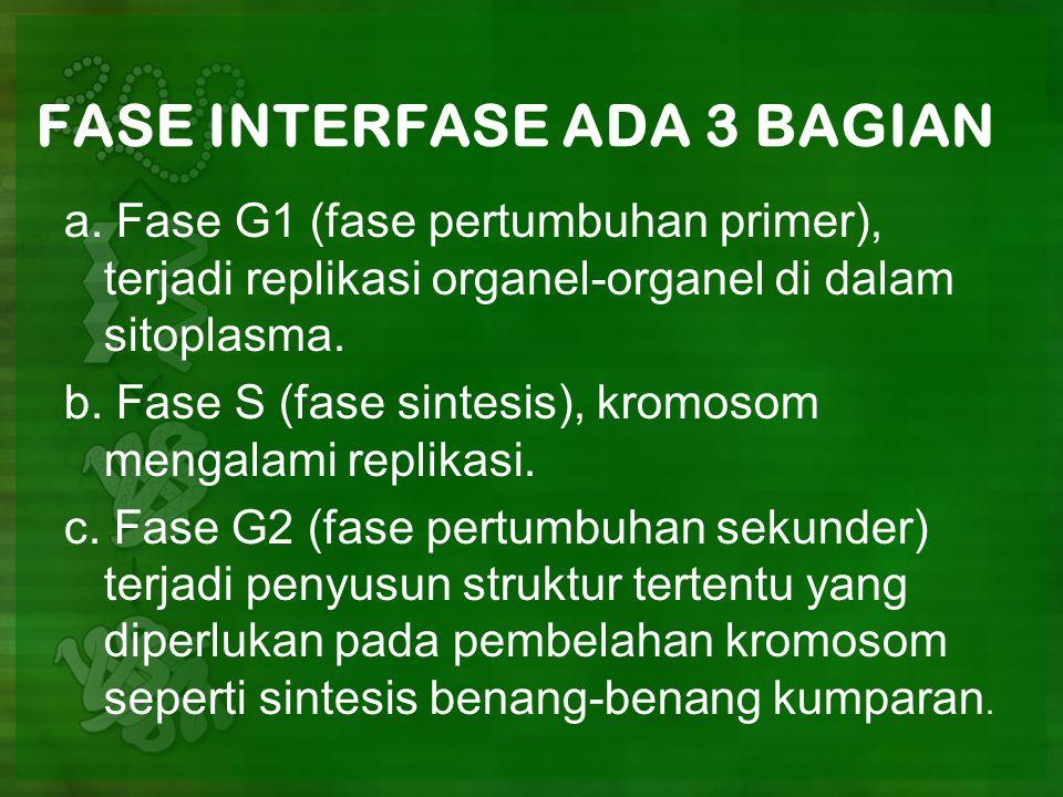 FASE INTERFASE ADA 3 BAGIAN a.
