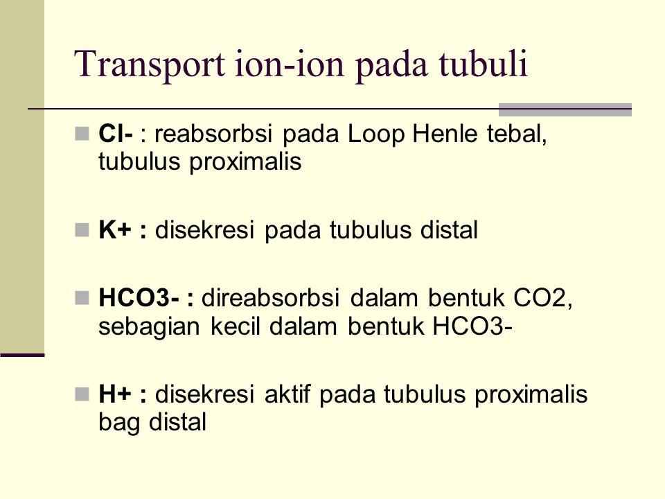 Urea : difiltrasi sempurna, direabsorbsi 40 – 50% Kreatinin : Difiltrasi sempurna Tidak direabsorbsi Disekresi di tubulus proximalis Inulin : Difiltrasi sempurna Tidak direabsorbsi Tidak disekresi
