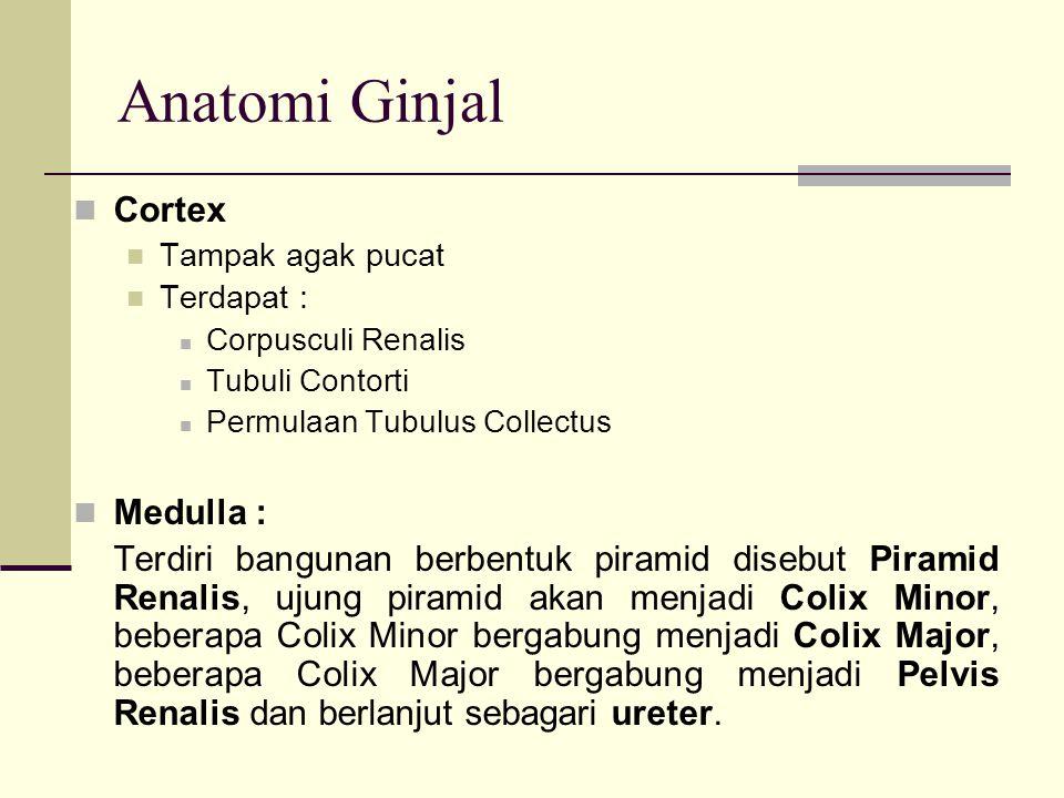 Anatomi Ginjal Pada Medulla ditempati : Ansa Henle, sebagian pars descendens dan pars ascendens tubulus Henle Sebagian besar tubulus Collectus