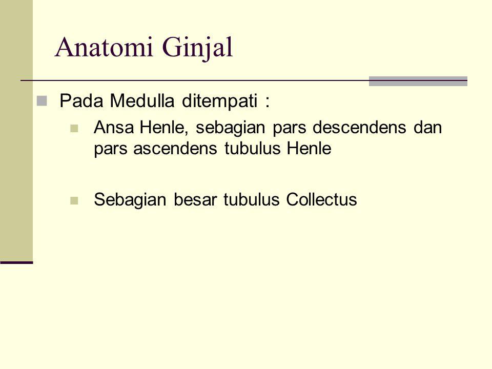Vaskulerisasi Ginjal Mendapat darah dari A.Renalis merupakan cabang dari Aorta Abdominalis.