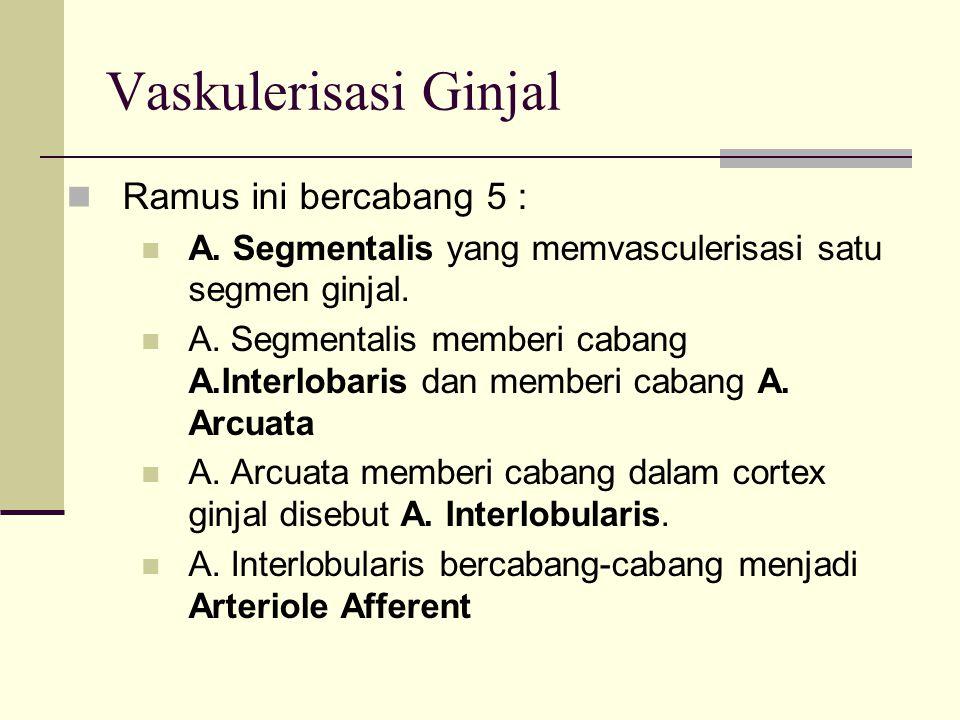 Vaskulerisasi Ginjal Arteriolle Afferent menuju Capsula Bowmani dan bercabang-cabang berupa Capiler.