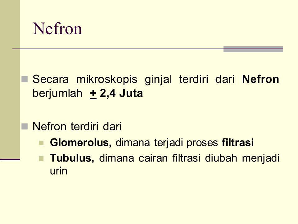 Nefron Secara morfologis ada 2 macam Nefron : Nefron Cortical Terdapat di 2/3 bagian luar Cortex, +85% jumlah Nefron mempunyai Loop Henle pendek dikelilingi kapiler disebut Peritubuler Kapiler.