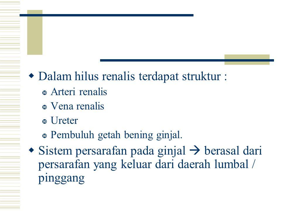  Dalam hilus renalis terdapat struktur :  Arteri renalis  Vena renalis  Ureter  Pembuluh getah bening ginjal.  Sistem persarafan pada ginjal  b