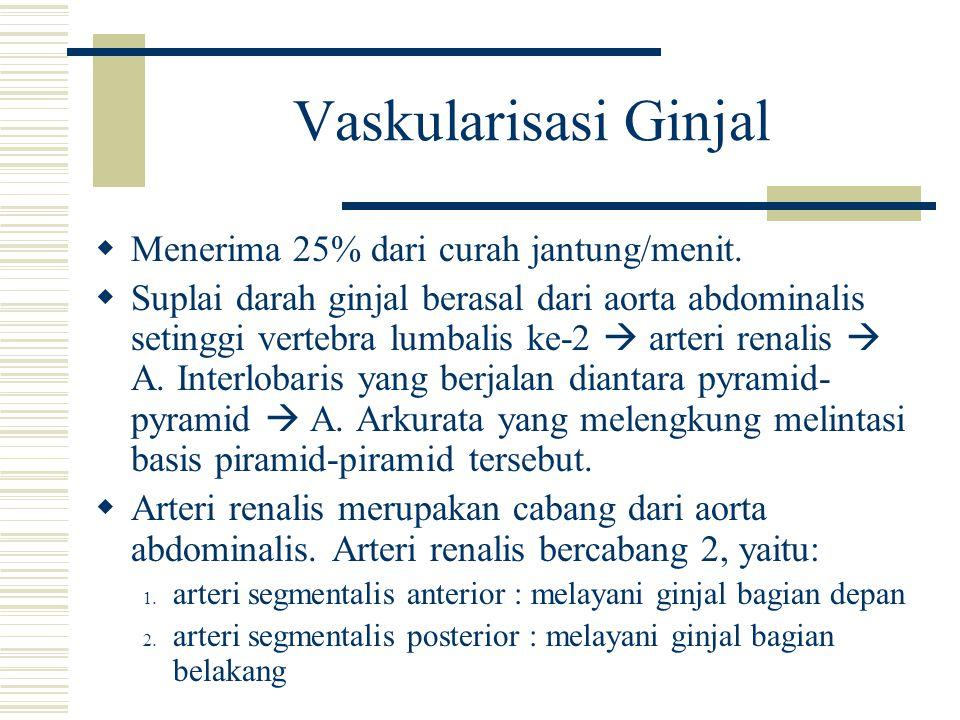 Vaskularisasi Ginjal  Menerima 25% dari curah jantung/menit.  Suplai darah ginjal berasal dari aorta abdominalis setinggi vertebra lumbalis ke-2  a