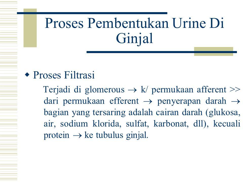 Proses Pembentukan Urine Di Ginjal  Proses Filtrasi Terjadi di glomerous  k/ permukaan afferent >> dari permukaan efferent  penyerapan darah  bagi