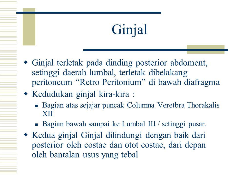 "Ginjal  Ginjal terletak pada dinding posterior abdoment, setinggi daerah lumbal, terletak dibelakang peritoneum ""Retro Peritonium"" di bawah diafragma"