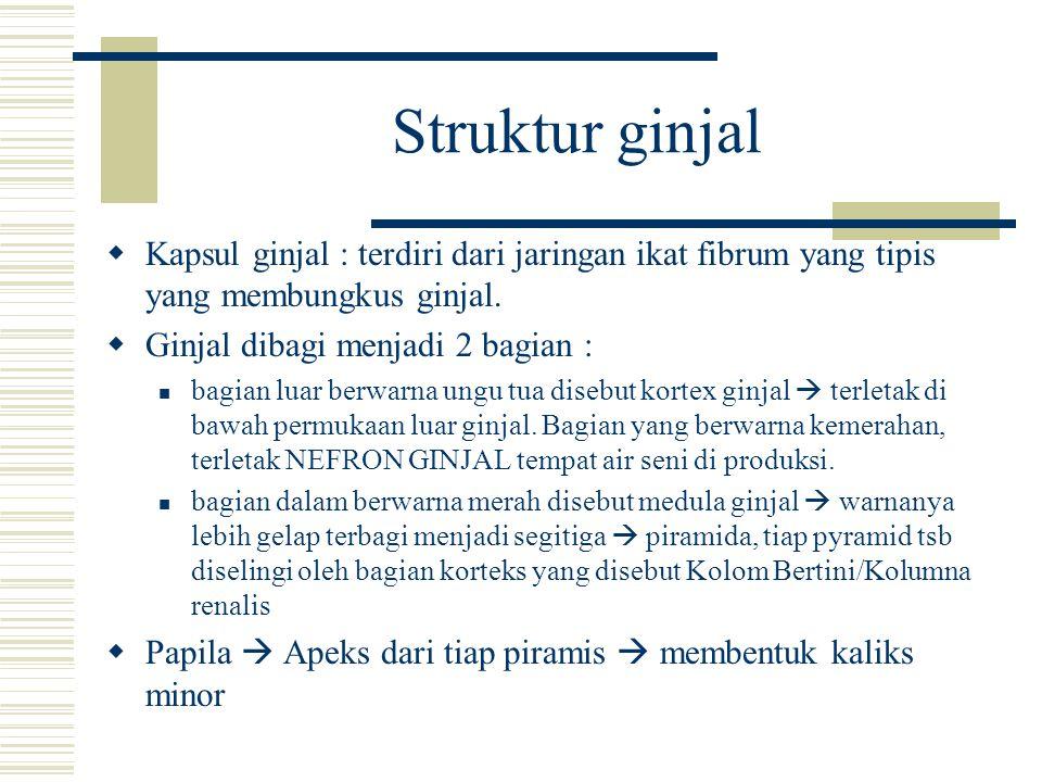 Struktur ginjal  Kapsul ginjal : terdiri dari jaringan ikat fibrum yang tipis yang membungkus ginjal.  Ginjal dibagi menjadi 2 bagian : bagian luar