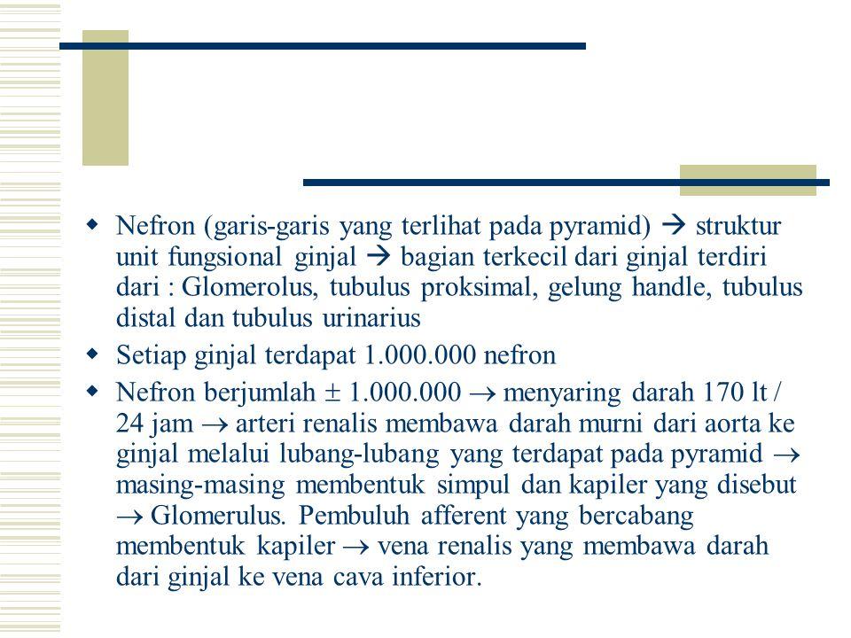  Nefron (garis-garis yang terlihat pada pyramid)  struktur unit fungsional ginjal  bagian terkecil dari ginjal terdiri dari : Glomerolus, tubulus p