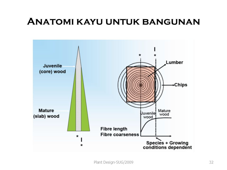 Anatomi kayu untuk bangunan Plant Design-SUG/200932