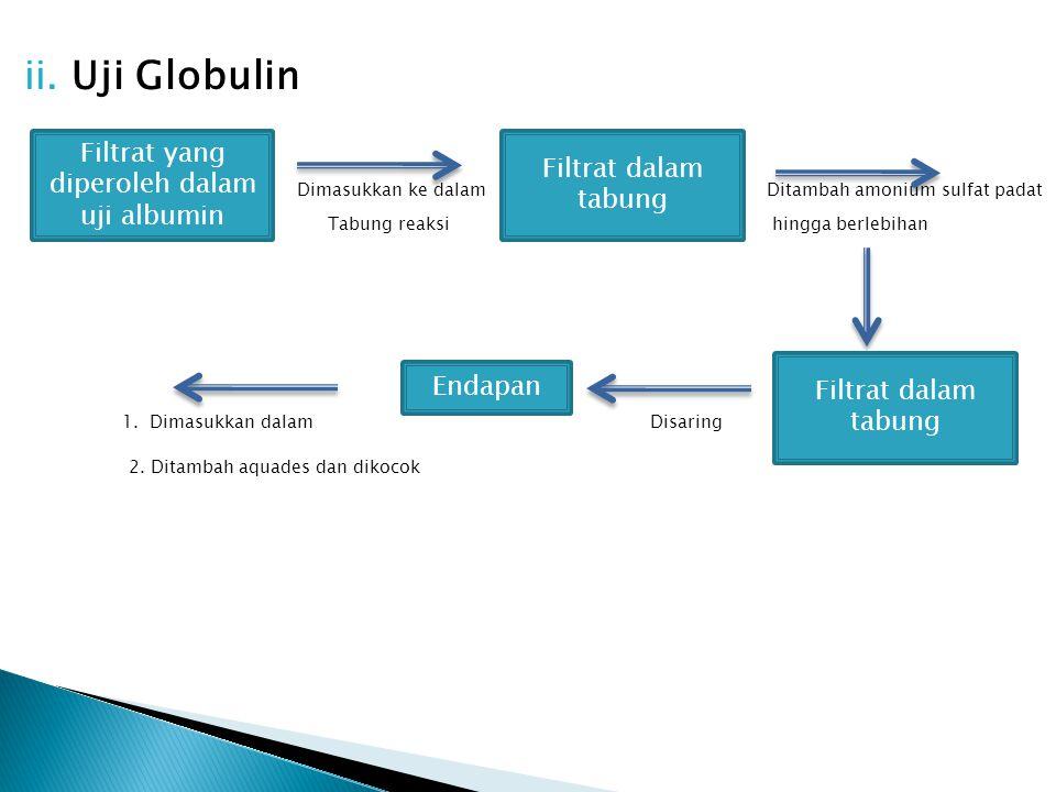 ii. Uji Globulin Dimasukkan ke dalam Ditambah amonium sulfat padat Tabung reaksi hingga berlebihan 1. Dimasukkan dalam Disaring 2. Ditambah aquades da