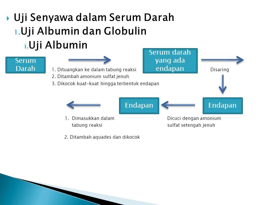  Uji Senyawa dalam Serum Darah 1. Uji Albumin dan Globulin i. Uji Albumin 1. Dituangkan ke dalam tabung reaksi Disaring 2. Ditambah amonium sulfat je